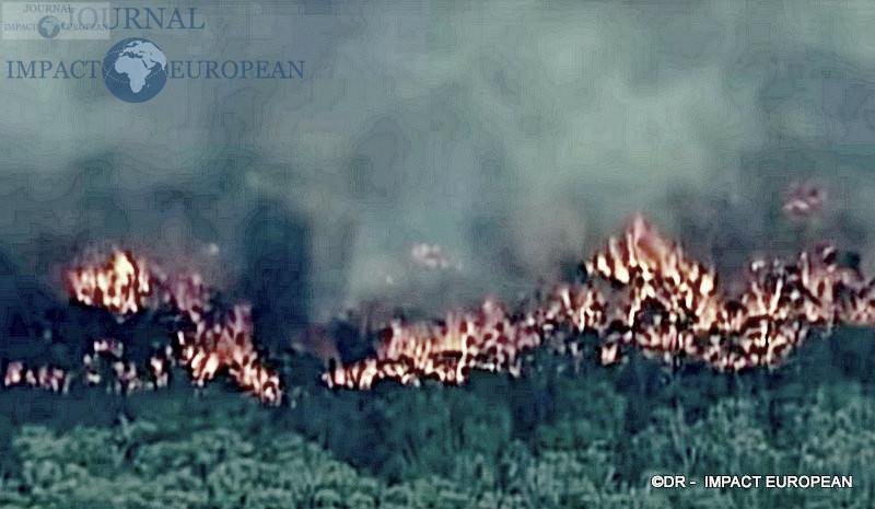 2La faune et la flore de l'Australie dévastées par les incendies