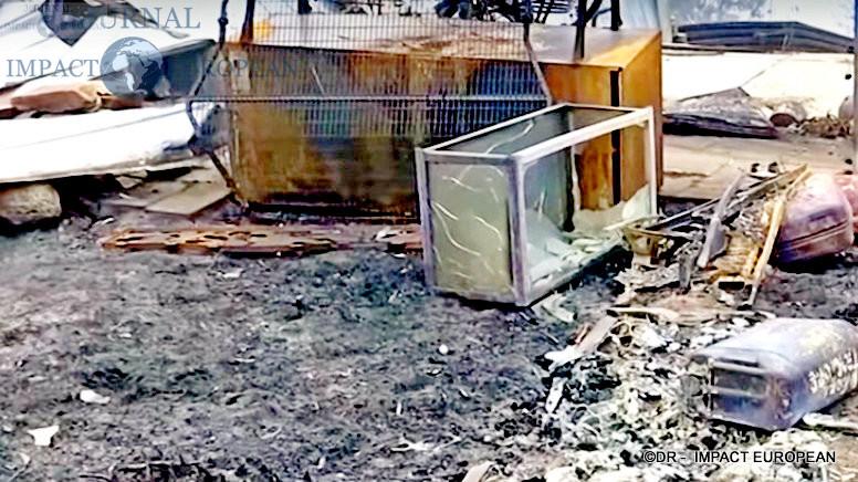 8La faune et la flore de l'Australie dévastées par les incendies